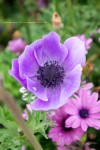인천대공원 꽃 축제