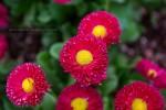 인천대공원 꽃 축제(3)