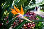 여미지 식물원에 신기한 꽃들